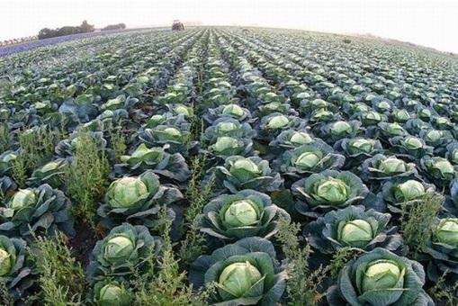 Возмещение затрат при покупке земель сельскохозяйственного назначения 2013.